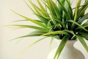 Rosnąca popularność firm ogrodniczych