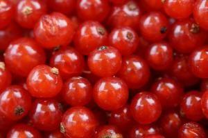 Produkcja frytek: od ogrodnictwa do chłodni