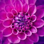 Kwiaty trudne w uprawie