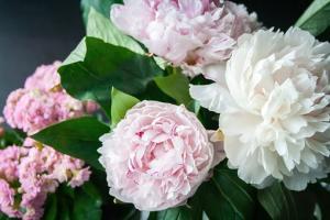 Kwiaciarstwo jako dziedzina ogrodnictwa