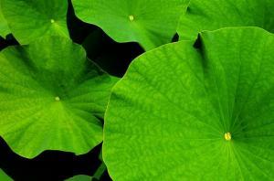 Ogród czyli, nowoczesność w kolorze zieleni