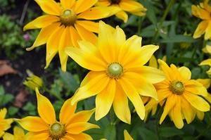 Czy projektowanie ogrodu jest czasochłonne?