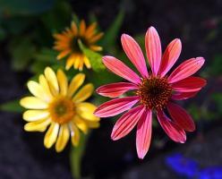 Przydomowy ogródek, czyli jak zachwycać ogrodem