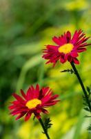 Ogrodnik amator a sadzenie kwiatów