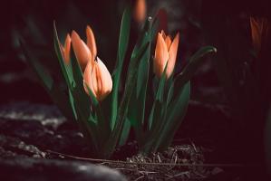 Nowoczesny ogród, czyli altana to nie wszystko