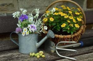 Gdzie szukać projektów ogrodów?