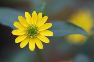O pikowaniu roślin