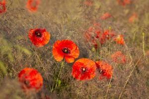 Lilak, piękne i pachnące kwiaty