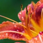 Sadzenie kolorowych kwiatów