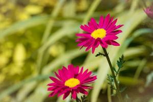 Zadbaj o piękny ogród