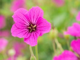 Jak dbać o róże rabatowe w naszym ogrodzie