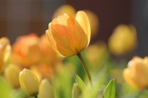 Produkcja pięknych kwiatów
