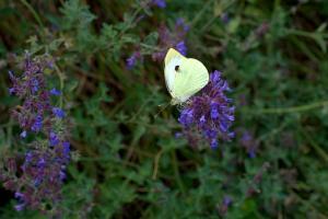 Lato w ogródku